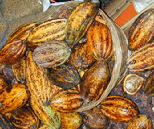 Signification Reve cacao