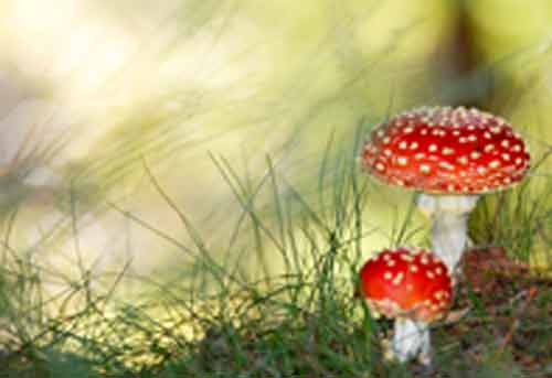Signification Reve champignons
