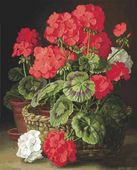 Signification Reves geranium cooper