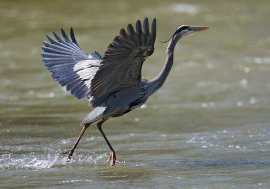Signification Reves heron
