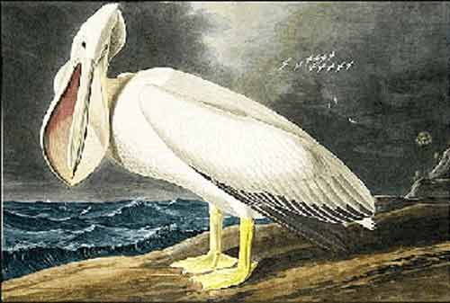 Signification Reves pelican john-james-audubo