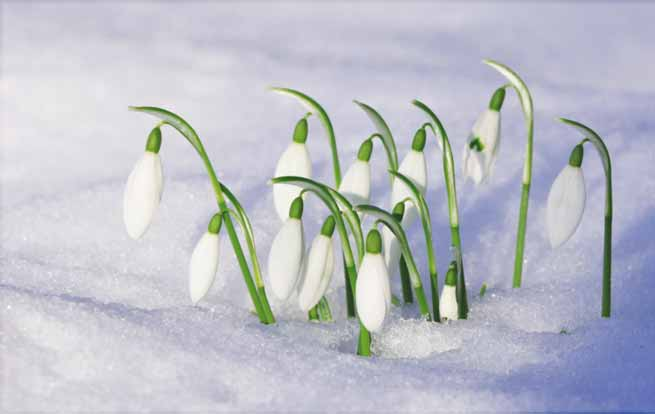 Signification Reves perce neige printemps