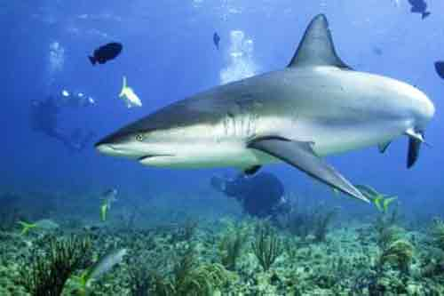Signification Reve requin